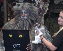 Grumpy Cat Makes Broadway Debut Alongside 'Cats' Friends